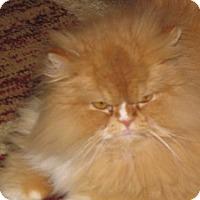 Adopt A Pet :: Chester - DFW Metroplex, TX