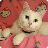 Adopt A Pet :: Cleo - Colorado Springs, CO