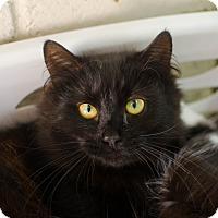 Adopt A Pet :: Cleopatra - Greenwood, SC