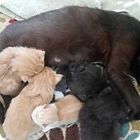 Adopt A Pet :: Sally - Monterey, VA