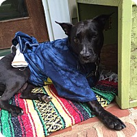 Pit Bull Terrier Mix Dog for adoption in Mooresville, North Carolina - Bessie