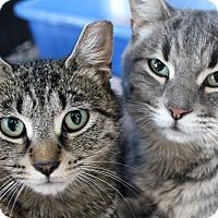 Adopt A Pet :: J. Pharaoh - Chicago, IL