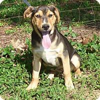 Adopt A Pet :: Nomi - Hartford, CT