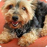 Adopt A Pet :: Dorothy - Alden, NY