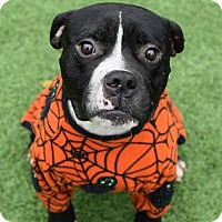 Adopt A Pet :: Benton - Kittery, ME