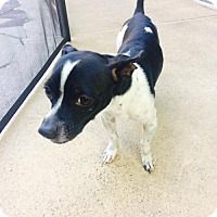 Adopt A Pet :: Pancho Villa - Sanford, FL