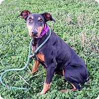 Adopt A Pet :: Zora - New Richmond, OH