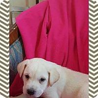 Adopt A Pet :: Flint - Ringwood, NJ