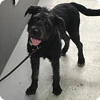 Adopt A Pet :: Chloe - Binghamton, NY