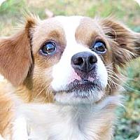 Adopt A Pet :: Sunshine - Mocksville, NC