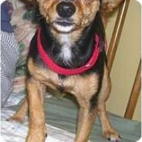 Adopt A Pet :: Gina - Allentown, PA