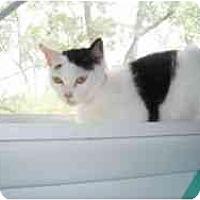 Adopt A Pet :: Jenny G - Hamburg, NY