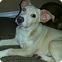 Adopt A Pet :: Heidi (PENDING!) - Chicago, IL