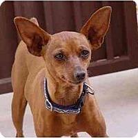 Adopt A Pet :: Pip - Phoenix, AZ