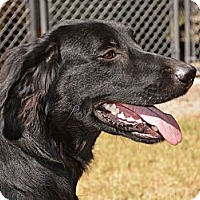 Adopt A Pet :: *Trent - PENDING - Westport, CT