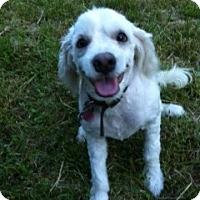 Adopt A Pet :: Marley - Arlington, TX