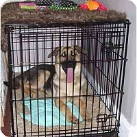 Adopt A Pet :: Thor - Chandler, IN