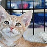 Adopt A Pet :: Sweet Pea - Temecula, CA