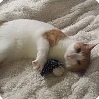 Adopt A Pet :: Seven--Love Machine! - Clarksville, IN