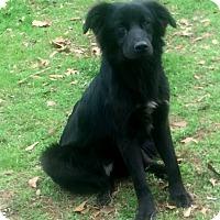 Adopt A Pet :: Malcolm - North Brunswick, NJ