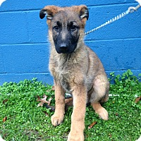 Adopt A Pet :: Clint - Waldorf, MD