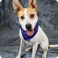Adopt A Pet :: Noah - Joliet, IL