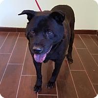 Adopt A Pet :: Slick - Sonora, CA