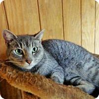 Adopt A Pet :: Anna - Odessa, FL