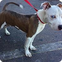 Adopt A Pet :: Blue Eye - Phoenix, AZ