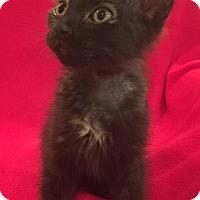 Adopt A Pet :: Debra - Scottsdale, AZ