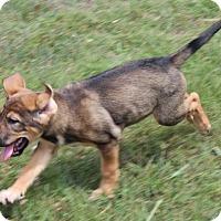 Adopt A Pet :: Mozzerella - Harmony, Glocester, RI