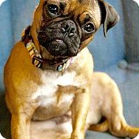 Adopt A Pet :: Lucille - Rockville, MD