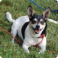 Adopt A Pet :: Davidson(14 lb) Cool Lil Guy! - SUSSEX, NJ