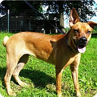 German Shepherd Dog Mix Puppy for adoption in Thomasville, North Carolina - Garnet