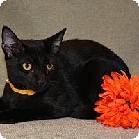 Adopt A Pet :: Cruise - Richmond, VA