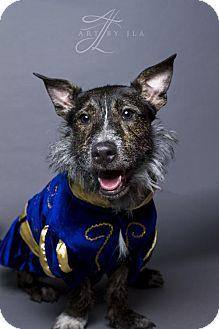 Terrier (Unknown Type, Medium) Mix Dog for adoption in Baton Rouge, Louisiana - Deano