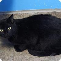 Adopt A Pet :: Matter - West Des Moines, IA