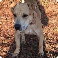 Adopt A Pet :: Zeus - Southbury, CT