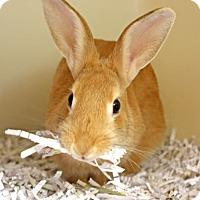 Adopt A Pet :: Fifi - Harrisonburg, VA