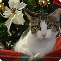 Adopt A Pet :: Lacey - Lebanon, MO