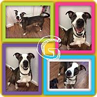 Adopt A Pet :: G - Colmar, PA