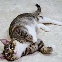 Adopt A Pet :: Misty - Diamondville, WY