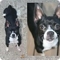 Adopt A Pet :: Piper - Newport, KY
