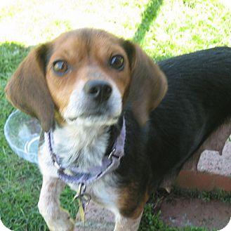 Beagle Mix Dog for adoption in Novi, Michigan - Mia