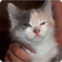 Adopt A Pet :: Twix - Acme, PA