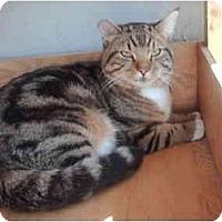 Adopt A Pet :: Thomas - El Cajon, CA