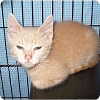 Adopt A Pet :: Caden - Colmar, PA