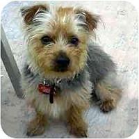 Adopt A Pet :: Chancy - Homestead, FL