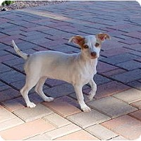 Adopt A Pet :: LEA - Scottsdale, AZ