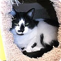 Adopt A Pet :: Panda - Edmonton, AB